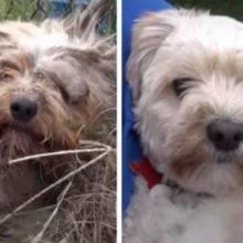 Cachorro que viveu toda a vida na rua é resgatado e recupera totalmente