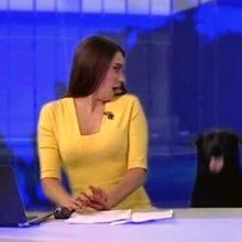 Cachorro Surpreende Invadindo Telejornal Ao vivo e Jornalista Fica Sem Ação