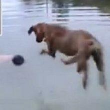 Cachorro vê homem se afogando e pula na água para salvar sua vida com uma grande manobra
