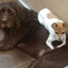Cães que não paravam de se abraçar são adotados juntos
