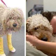 Cão com Passado de Abandono e dor não Segura a Felicidade ao Ganhar uma Segunda Chance