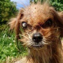 """Cão de Rua Conhecido como """"Assustador"""" é Resgatado e Transformado pelo Amor de Pessoas Gentis"""