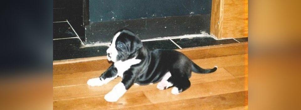 Casal adota filhote de cachorro – 5 meses mais tarde eles não acreditam no que ele se transformou