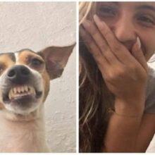 Ela pede a um cachorro do abrigo para tirar uma selfie e ele lhe dá seu melhor sorriso