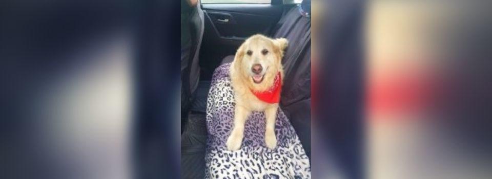 Ela Pede Ajuda para Levar seu Cachorro Doente para a Praia e um Taxista a Faz Chorar
