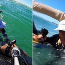 Surfista salva cachorro que estava se afogando em alto-mar