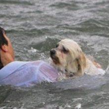 Homem se arriscou para salvar cachorro de idosa em Guarujá