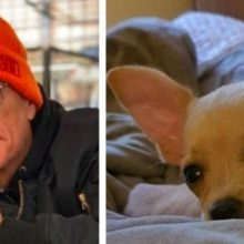Jean-Claude Van Damme ajuda a salvar chihuahua da eutanásia