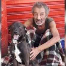 Morador de rua desesperado implora em lágrimas por um lar para seu cachorro dependente