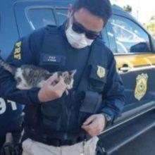 Polícia Intervém ao ver Homem Atirando Animalzinho Pela Janela do Carro