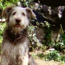 Quando ele encontrou seu cachorro, ele estava isolado e prestes a ser sacrificado injustamente