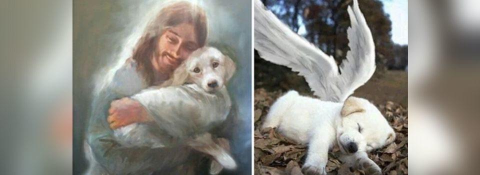 Testamento de um cachorro para os humanos