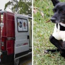 Veterinários Percorrem as Ruas com Ambulância Ajudando Animais Desprotegidos