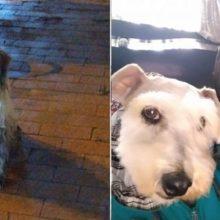 Vigilante encontra cachorro sujo, emaranhado e largado na chuva e o adota