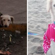 A bela transformação de um cachorro que tinha sarna e vagava sozinho