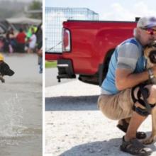 Abandonado por seu antigo dono após uma tempestade, um bom samaritano resolve acolhê-lo e salvá-lo do pior
