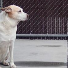 Após 3 anos vagando e 6 meses em um abrigo, este cão deprimido explode de alegria ao encontrar seu dono