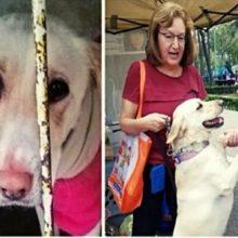 Cachorra deixada para morrer, quase não acredita quando vieram salvá-la