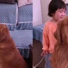 Cachorro defende a irmãzinha que chora por causa da bronca da mãe