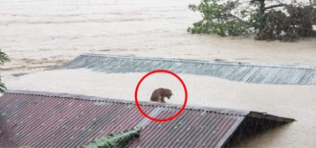 Homem resgata cachorro que esperava por sua família que fugiu para se salvar de uma enchente