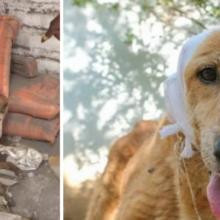 Cachorro perdido exausto de tanta dor, esperava seu fim, até ser resgatado e passar por uma transformação incrível