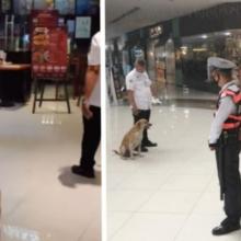 Cachorro que foi expulso em um shopping, agora faz parte da equipe e um dos seguranças