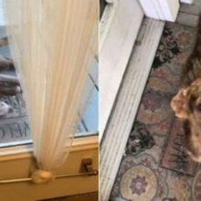 Cão de rua deita em varanda de uma família para descansar e acaba sendo resgatado