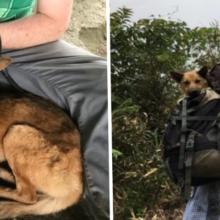 Dois homens caminham mais de 12 horas para resgatar um cão gravemente ferido por uma armadilha