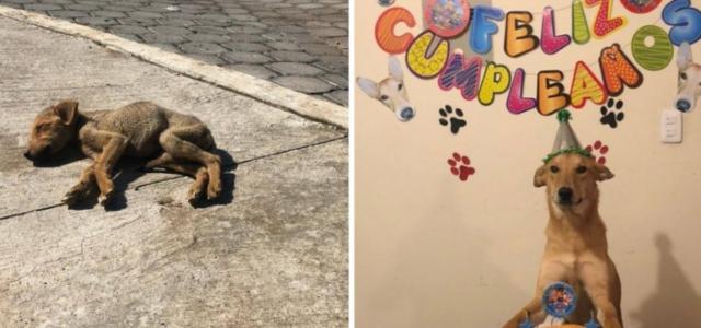 Eles o encontraram ainda cachorrinho na rua, ao sol e muito fraco. Hoje é a alegria da sua família