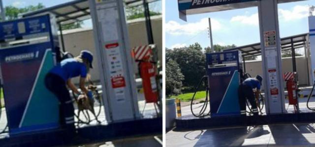 Funcionária de posto de gasolina é flagrada dando banho em cão de rua – Eu queria dar a ele uma vida mais digna
