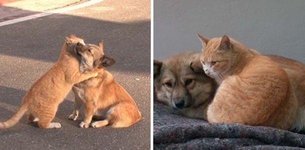 Gatinho perdido conforta um cachorro que foi abandonado pela família