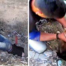 Homem mergulha em esgoto para resgatar cachorro que estava preso