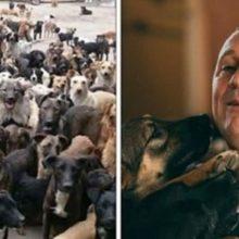 Homem que começou resgatando 4 cães, hoje tem um abrigo com 750 animais