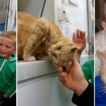 Menino foi adotar um novo amiguinho e reencontrou seu gato perdido há mais de um ano