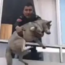Os policiais fazem o possível para salvar um cachorrinho de um incêndio