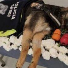Polícia se despede com honra do cão com um belo funeral. Seus brinquedos o acompanharam