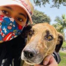 Um pobre cachorrinho acaba no meio da pior disputa entre o abrigo e a mulher que o adotou