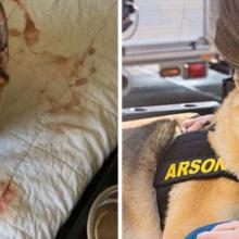 Voluntários ajudam cães com doenças terminais e realizarem uma lista de desejo antes do fim