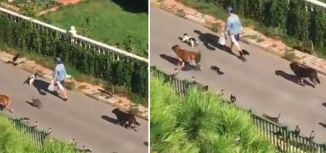 A história por trás do peculiar vídeo de uma mulher passeando com cães, gatos e pássaros