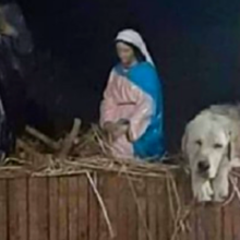 Cachorro abandonado se aconchegou em um cantinho no presépio da cidade, do lado de José e Maria