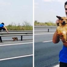Cachorro é Abandonado no Meio de Rodovia e Homem Corre para Salvá-lo