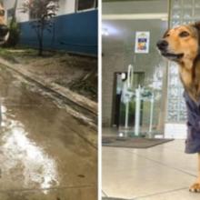Cão de rua acolhido por policiais militares vira mascote da corporação