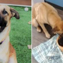 Cãozinho que Foi Resgatado das ruas Cuidava de Cinco Gatinhos Recém-nascidos