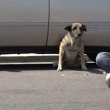 Desolado após ser abandonado, cãozinho se recusava a sair debaixo de carro, até que..