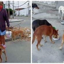 Idosa divide o pouco de comida que tem com cães que foram abandonados nas ruas