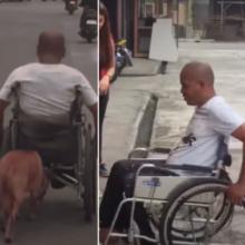 Cachorro ajuda seu dono a se locomover empurrando sua cadeira de rodas