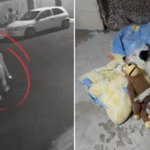 Mulher adota cachorro que seu vizinho covarde abandonou na rua