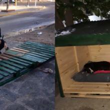 Mulheres constroem casinha para proteger cães de rua do frio, eles descansam aliviados