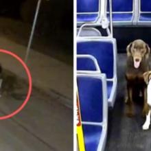 O motorista vê 2 cachorrinhos desesperados na beira da estrada na véspera de Natal e entra em ação