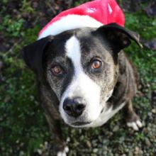 O Primeiro Natal do Cachorro com a Família Depois de Anos Sem um Lar